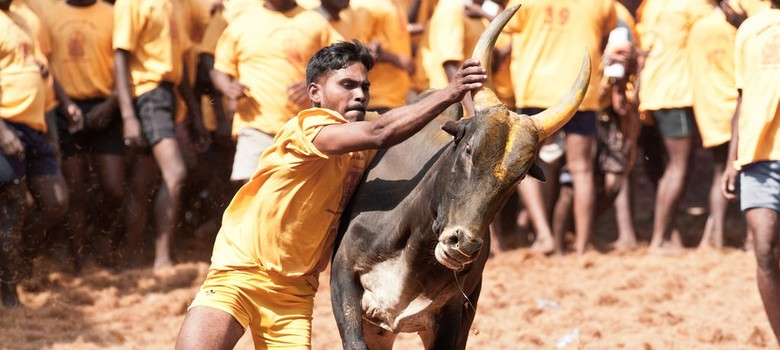 Hindutva hypocrisy: Why is beef banned as food but bull torture allowed for sport?