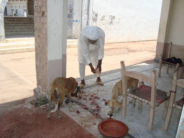 A devotee offers meat to dogs. Credit: Haroon Khalid.