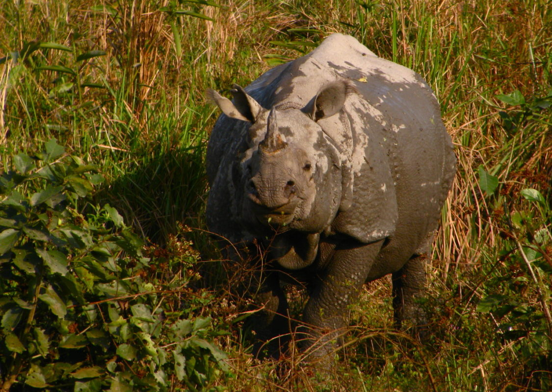 rhino poaching essay View rhino poaching research papers on academiaedu for free.