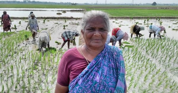 In Tamil Nadu, farmers have lost an entire crop season to the Cauvery row
