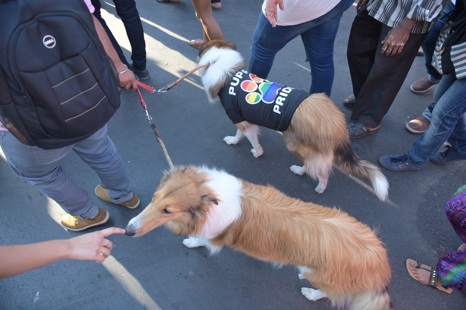 Puppies marched for pride too.