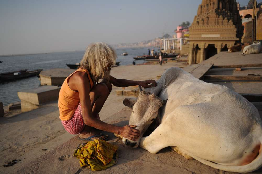 A tender moment between man and beast in Varanasi.