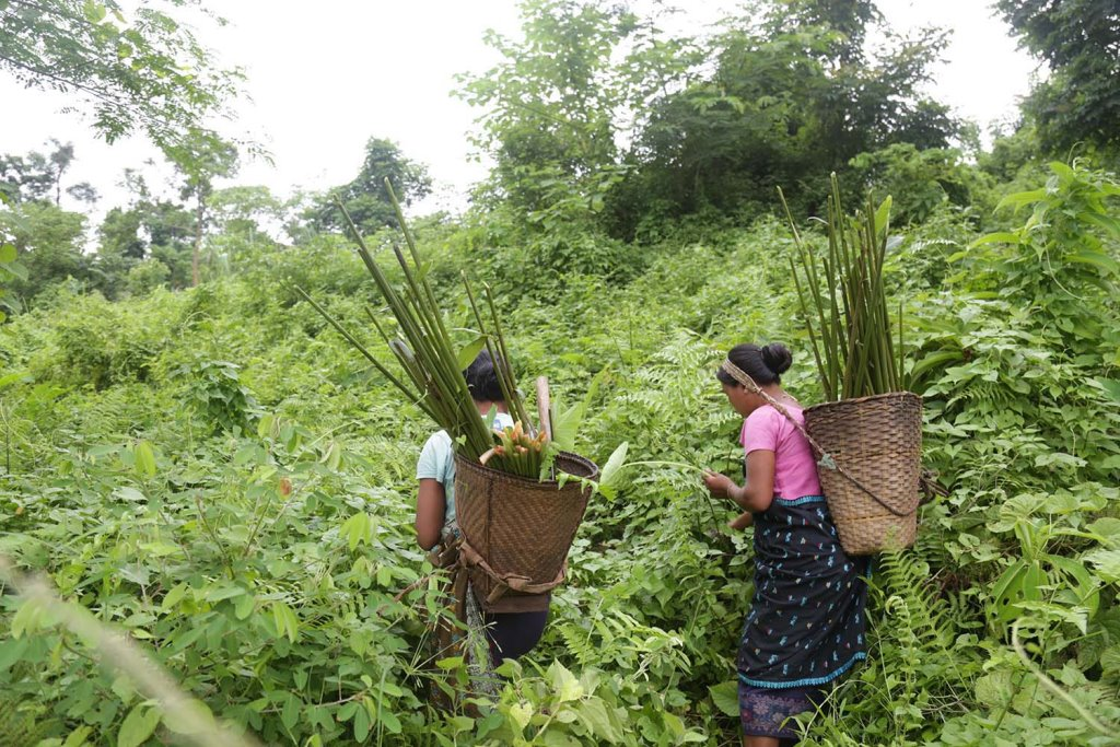 Indigenous Karbi women foraging for wild edible forest resources. Image: Aakash Doshi (Assam, 2016)