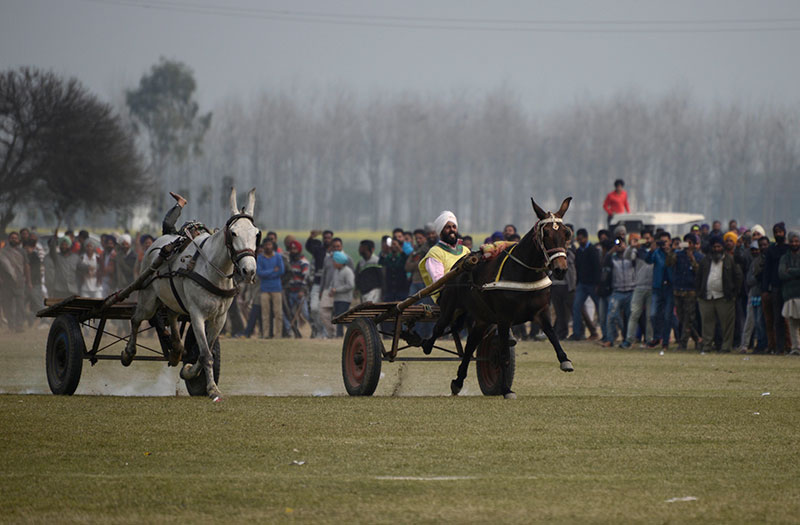 A cart race looks positively tame compared to some of the other events at the Rural Olympics.