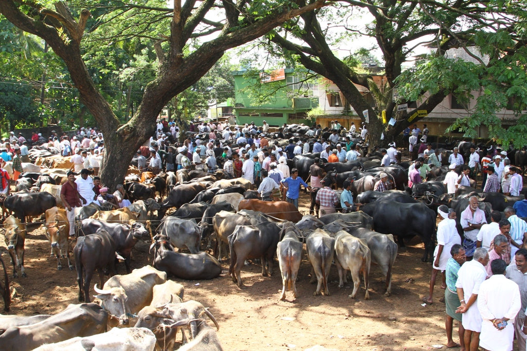 Curbs on cattle trade affect secular ethos, Kerala CM to PM