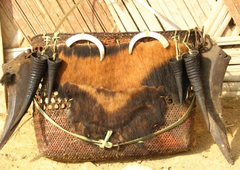 A priest's basket made with the parts of a Himalayan serow, a wild pig and Malayan sunbear. (Photo credit: Rohit Naniwadekar).