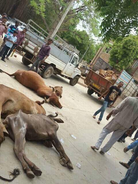 Some protesters in Gujarat began leaving cattle carcasses on the streets on Tuesday itself. Photo: India Resists/Facebook.