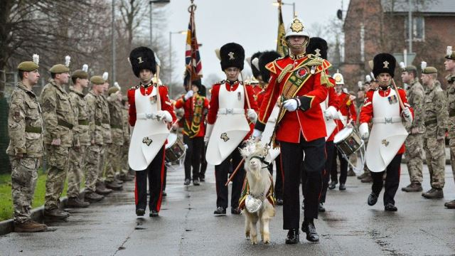 Meet The Kashmiri Goat Soldier Of The British Army
