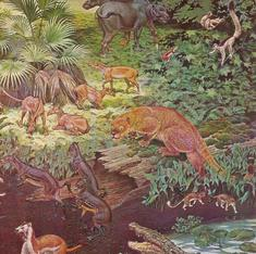 Fossils help to reveal the true colours of extinct mammals for the first time