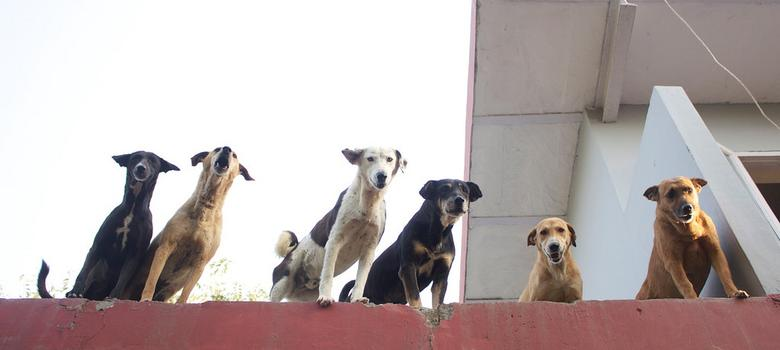 Friendicoes, Delhi's beloved shelter for stray and sick animals, faces closure