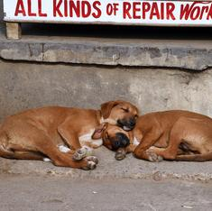 Mumbai: Housing society residents beat up two sisters for feeding stray dogs inside the building