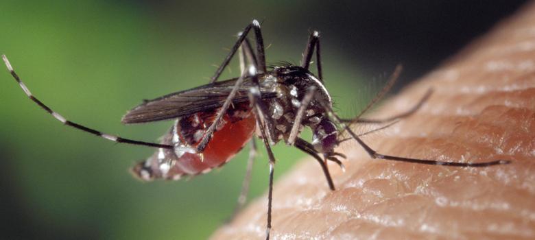 Chikungunya outbreak in Delhi is media-created panic, says Heath Minister Satyendra Jain