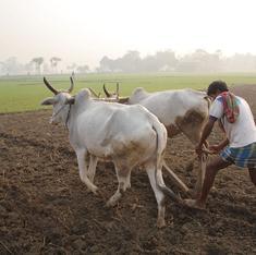 As fertiliser riots spread across Haryana, police stations turn into urea distribution centres