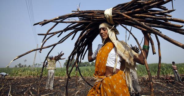 In Marathwada, migrant cane cutters earn a little cash but not much respect