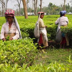 Sikkim is now India's first fully organic state