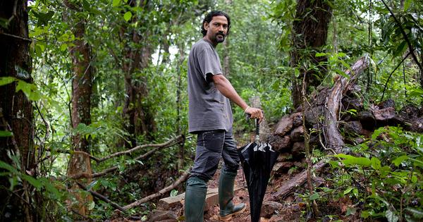 In one of India's wettest places, researchers chase and find new species of snakes in the wild