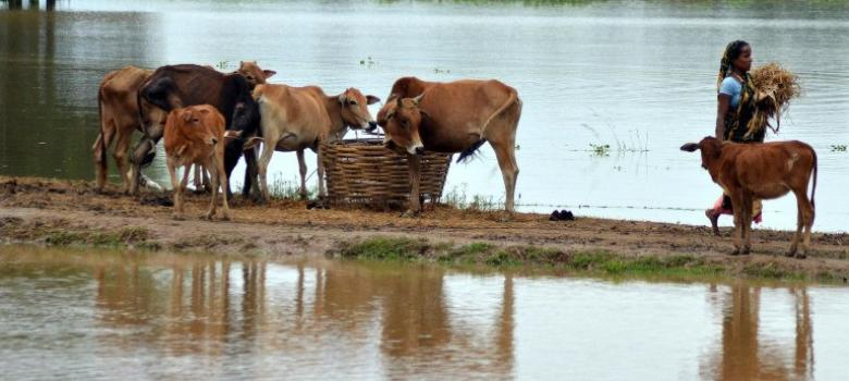 Why I have put my name on a PIL opposing Maharashtra's beef ban