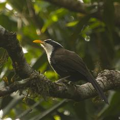 Audio: An ecologist, a musician and a photographer walk into a recording studio...