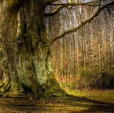 Can trees really change sex?