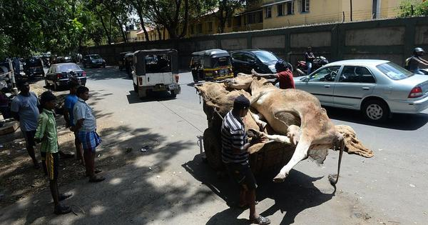 Cow protection laws are hurtling India down the path of Pakistan's blasphemy edicts