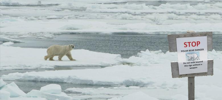 In the path of the polar bears: what it's like to be an Arctic scientist