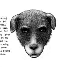 Read Orijit Sen's graphic story 'Portrait of an Artist as an Old Dog'