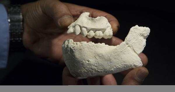Found: our 3m-year-old forebear who lived alongside 'Lucy'