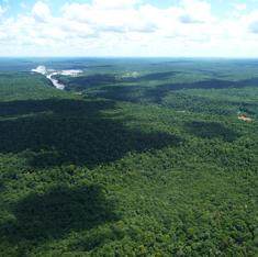 World's forests are fragmenting into tiny patches – risking mass extinctions