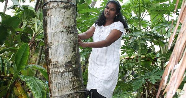 For this Kochi woman coconut-tree climber, life is a daily struggle against the odds