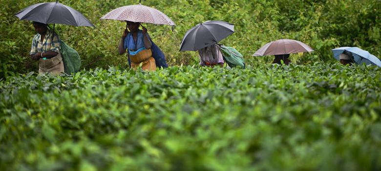 Dehradun's citizens fought Uttarakhand over a tea estate (and may have won)