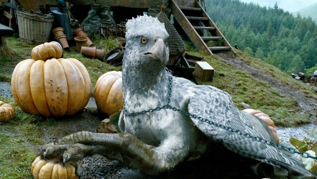 Buckbeak the hippogriff.
