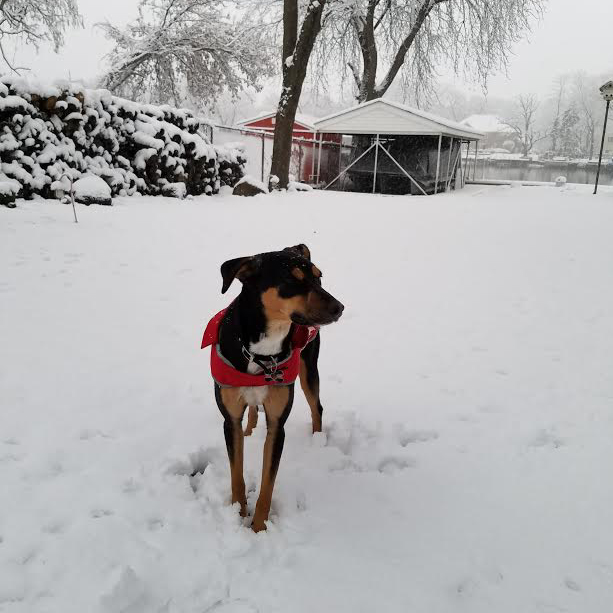 Roxy's first snowfall. Image credit: Pam and Jeff Spain
