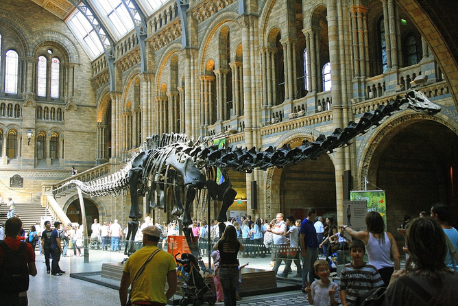 Diplodocus at the Natural History Museum.  Source:Valdiney Pimenta/flickr, CC BY
