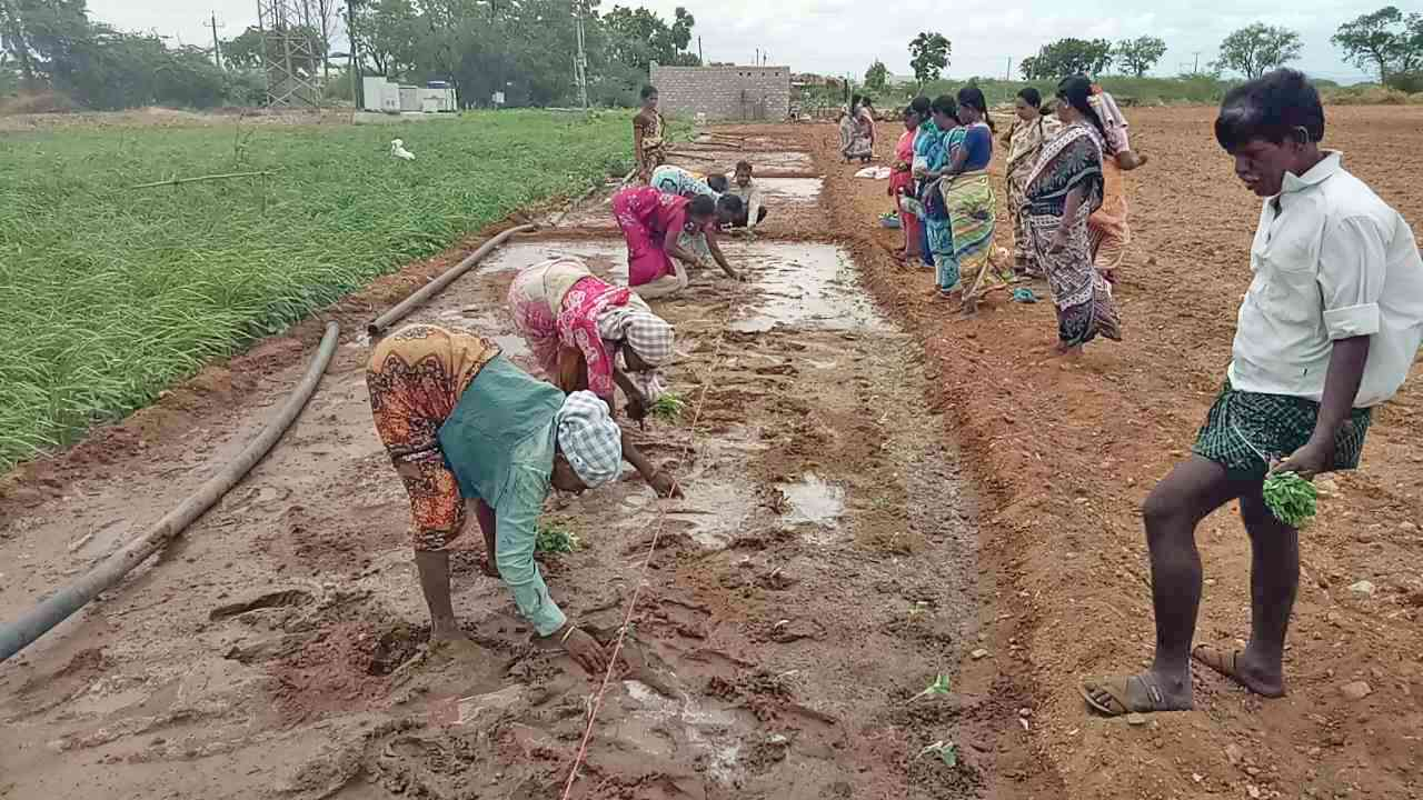 Funding pattern of Andhra Pradesh's natural farming project leave open the possibility of corporations taking further control of agriculture. Photo courtesy ZBNF Project Team