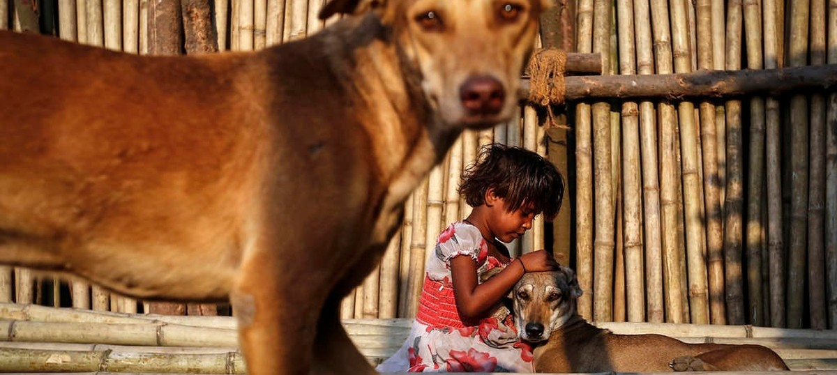 In India, animal lovers feeding strays are being met by