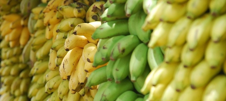 Disease may wipe out world's bananas – but here's how we might just save them