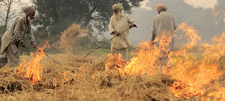 Bring the 21 farmers you stopped from burning crops, NGT tells Punjab government