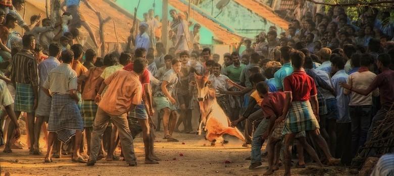 If you ban jallikattu for animal cruelty, shut down zoos as well: Tamil Nadu tells Supreme Court