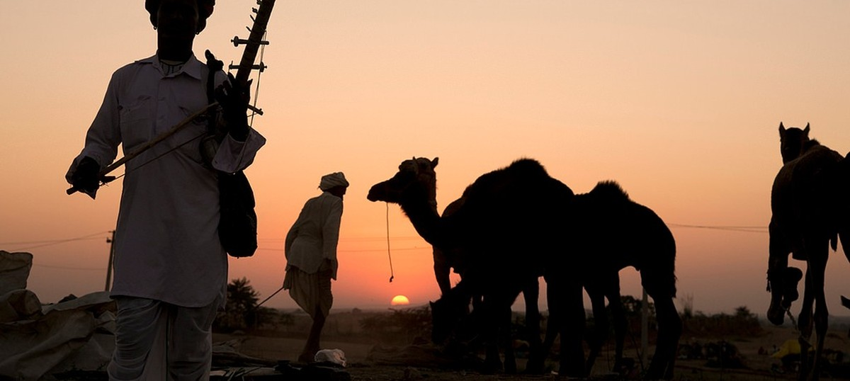 The key to saving Rajasthan's dwindling camels is their milk