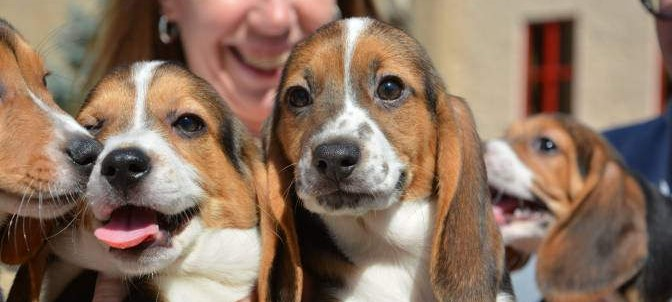 The world's first test-tube puppies have been born