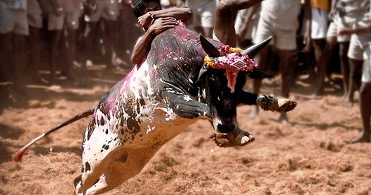 Madurai: Jallikattu supporters baton-charged, 30 detained on the first day of Pongal