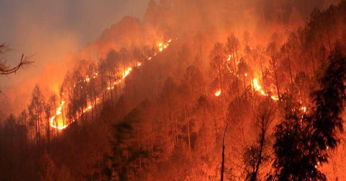 'जब तक आप उत्तराखंड के लोगों को उनका जंगल वापस नहीं लौटाएंगे तब तक इस आग को नहीं रोक पाएंगे'