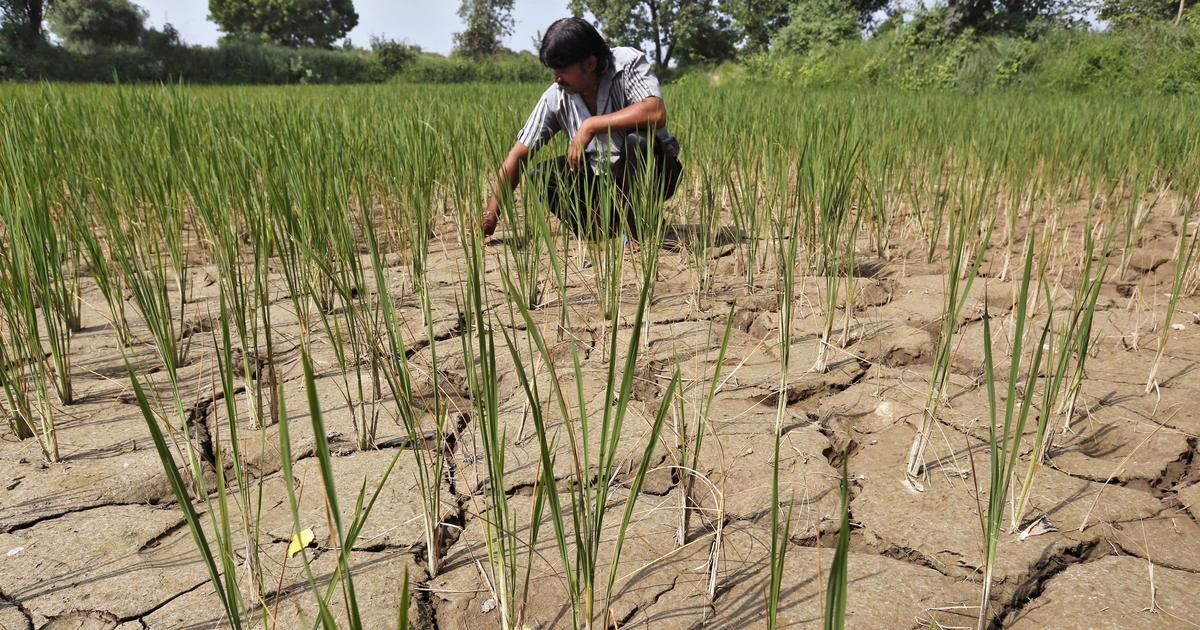 महाराष्ट्र : गलत पूर्वानुमान पर किसानों ने मौसम विभाग के खिलाफ शिकायत दर्ज करवाई