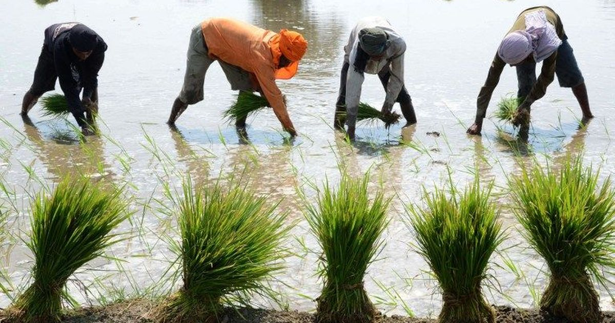 In Tamil Nadu and Assam, farmers' crop insurance claims are being bounced between state agencies