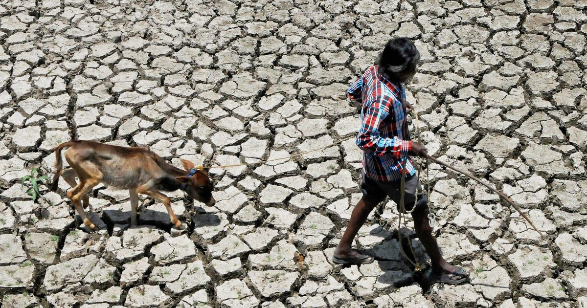 In drought-hit Karnataka, farmers are selling cattle and