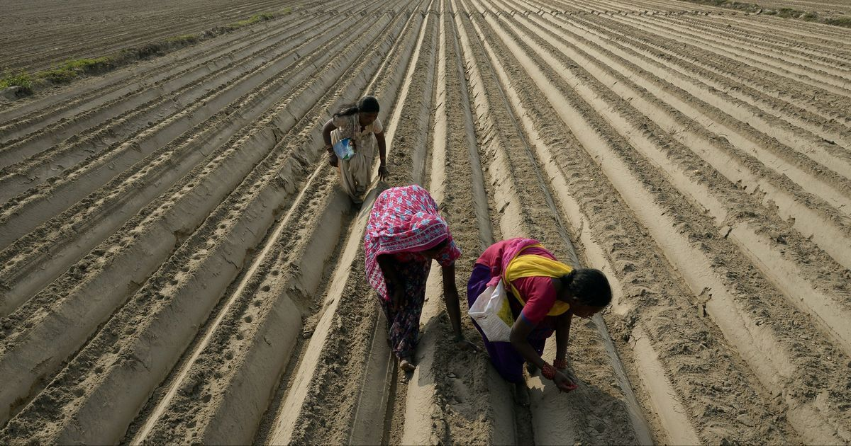 India's plan to collectivise millions of small and marginal farmers may fall short