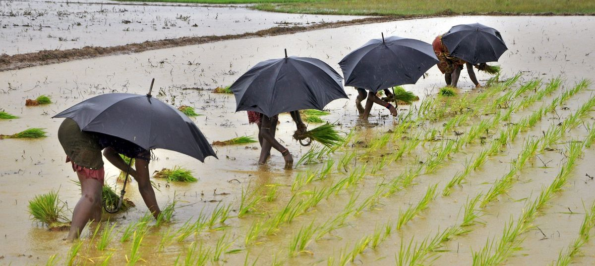 Despite concerns, monsoon will progress on schedule, says India Meteorological Department