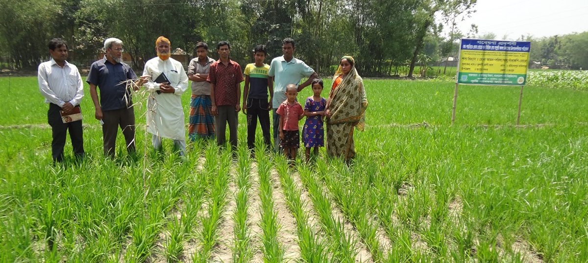 how to cultivate rice in india