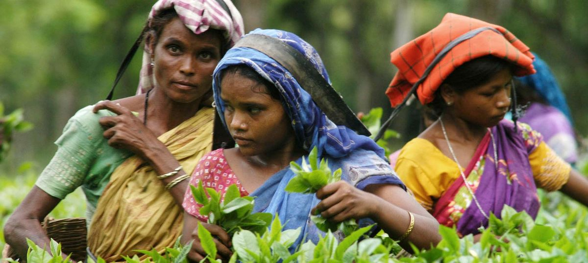 Young mothers are dying in Assam's tea gardens – at a rate higher than anywhere in India