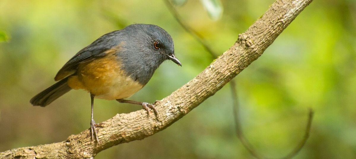 (PDF) Monitoring bird diversity in Western Ghats, Kerala